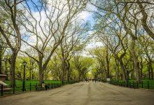 เซ็นทรัลพาร์ค Central Park