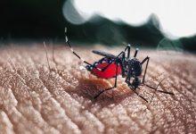Photo of โรคไข้เลือดออก (Dengue Fever) อาการ และ วิธีรักษา