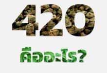 Photo of 420 คืออะไร? ทำไมถึงกลายมาเป็นวันกัญชาโลก