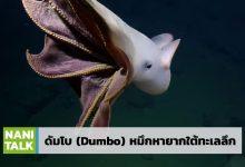 Photo of ดัมโบ (Dumbo) หมึกหายากใต้ทะเลลึก