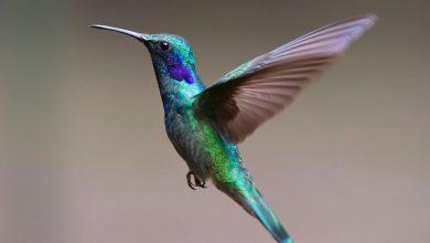 Photo of วันนกแห่งชาติ (National Bird Day) 5 มกราคม