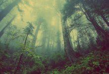 วันอนุรักษ์ทรัพยากรป่าไม้ของชาติ