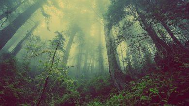 Photo of 14 มกราคม วันอนุรักษ์ทรัพยากรป่าไม้ของชาติ 2563