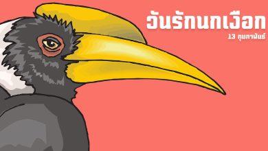 นกเงือก วันรักนกเงือก