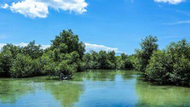 Photo of 12 เมษายน วันป่าชุมชนชายเลนไทย รักษาทรัพยากรธรรมชาติไม่ให้สูญหายไป