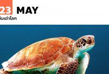 Photo of วันเต่าโลก 23 พฤษภาคม World Turtle Day