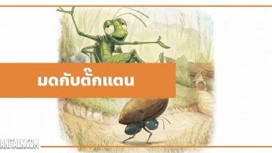 นิทานอีสป : มดกับตั๊กแตน (The Ants & the Grasshopper)