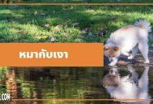 Photo of นิทานอีสป : หมากับเงา (The Dog & His Reflection)