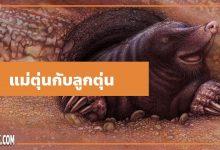นิทานอีสป : แม่ตุ่นกับลูกตุ่น (The Mole & his Mother)
