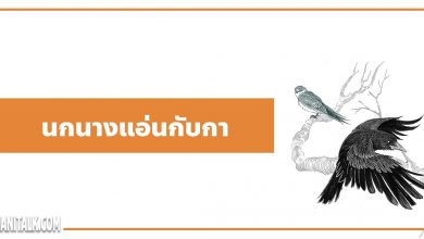Photo of นิทานอีสป : นกนางแอ่นกับกา (The Swallow & the Crow)