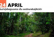 Photo of 24 เมษายน ผืนป่าทุ่งใหญ่นเรศวร เป็น เขตรักษาพันธุ์สัตว์ป่า
