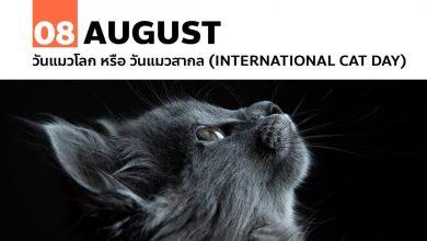 8 สิงหาคม วันแมวโลก หรือ วันแมวสากล (International Cat Day)