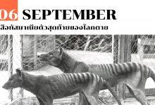 Photo of 6 กันยายน เสือทัสมาเนียตัวสุดท้ายของโลกตาย
