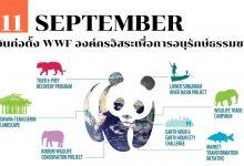 Photo of 11 กันยายน วันก่อตั้ง WWF องค์กรอิสระเพื่อการอนุรักษ์ธรรมชาติ