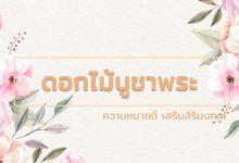 ดอกไม้ไหว้พระ ดอกไม้บูชาพระ ดอกไม้ไหว้พระ ดอกไม้บูชาพระ ความหมายดี เสริมสิริมงคล!