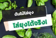 Photo of 5 ต้นไม้ไล่ยุง สมุนไพรไทย ปลูกแล้วไล่ยุงได้จริง!