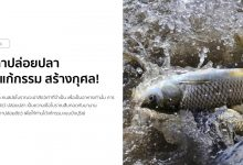 Photo of คาถาปล่อยปลา ปล่อยเต่า เพื่อแก้กรรม สร้างกุศล!