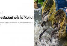 Photo of ปล่อยปลา ปล่อยสัตว์อย่างไร ไม่ให้บาป!