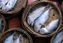 ปลาทู (Short mackerel) ปลาของชาติที่มีประโยชน์มากมาย!